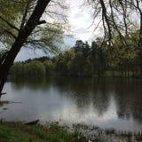 Взгляд дерева около озера в пасмурной ненастной погоде в лете Стоковые Изображения