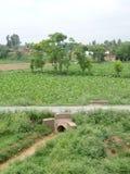 Взгляд деревни растительности Стоковая Фотография