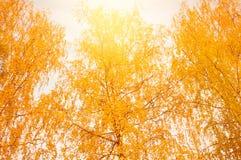 Взгляд деревьев Стоковое Фото