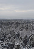 Взгляд леса зимы Стоковые Фото
