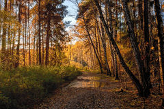 Взгляд леса осени в октябре Стоковые Изображения RF