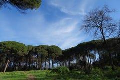 Взгляд леса с голубым небом Стоковое Фото
