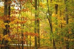 взгляд леса утра Стоковые Фото