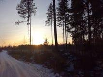 Взгляд леса Финляндии ландшафта зимы захода солнца Стоковые Фотографии RF