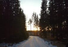 Взгляд леса Финляндии ландшафта зимы захода солнца Стоковые Изображения RF