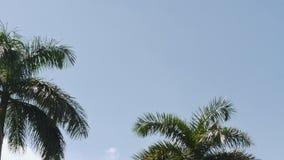 Взгляд летания самолета через ясное небо и palmtop рядом с ним - солнечность приходя через пальму акции видеоматериалы
