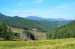 Взгляд лета прикарпатских гор. стоковое фото rf