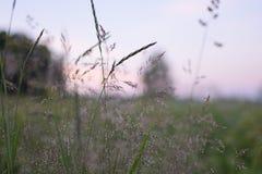взгляд лета травы поля угла широко Стоковая Фотография