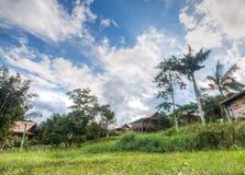 Взгляд джунглей, Khao Yai, Таиланд Стоковые Изображения