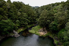 Взгляд заповедника леса Whangarei от водопада Стоковые Изображения