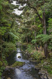 Взгляд заповедника и реки леса Whangarei Стоковое Изображение RF