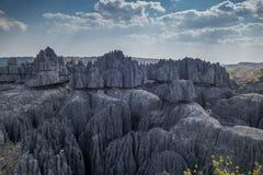 Взгляд заповедника Bemaraha tsingy Стоковые Фотографии RF