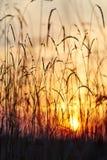 Взгляд захода солнца через траву стоковые фото