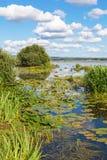 Взгляд залива в озере Стоковые Изображения RF