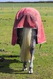 Взгляд задней части лошадей с оковалком и кабеля в его нынешнем виде в поле на яркий солнечный день Стоковое Изображение RF