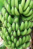 взгляд зеленого цвета банана очень стоковые фото