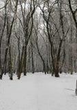 Взгляд зимы леса Стоковая Фотография