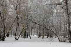 Взгляд зимы леса Стоковые Фотографии RF