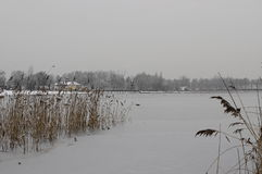 Взгляд зимы озера побережья Pogoria стоковая фотография