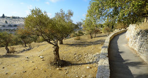 Взгляд Иерусалима от держателя оливок Стоковая Фотография RF