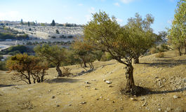 Взгляд Иерусалима от держателя оливок Стоковые Фотографии RF