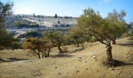 Взгляд Иерусалима от держателя оливок Стоковое Изображение RF