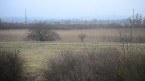 Взгляд из окна поезда двигая через ландшафт осени видеоматериал