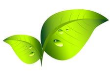 Взгляд листьев профессиональный Стоковое фото RF
