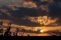 Взгляд и ветви захода солнца Стоковая Фотография RF