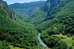 Взгляд каньона реки Тары в Черногории Стоковые Фотографии RF