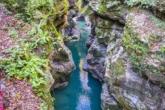 Взгляд каньона martvili Стоковое Изображение RF