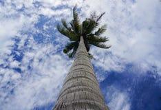 Взгляд кокосовой пальмы и пасмурное голубое небо на Малайзии приставают к берегу Стоковое Фото
