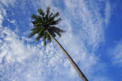 Взгляд кокосовой пальмы и пасмурное голубое небо на Малайзии приставают к берегу Стоковые Изображения