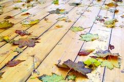 Взгляд конца-вверх на влажных зеленых и желтых листьях клена Стоковые Фотографии RF
