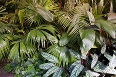 Взгляд конца-вверх различных листьев ладони предпосылка тропическая Стоковая Фотография