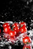 Взгляд конца-вверх свежих зрелых томатов с падениями воды изолированных на черноте стоковые фото
