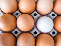 Взгляд конца-вверх сырцового цыпленка Каждое яичко желтое яичко, за исключением белых яичек утки Стоковое фото RF