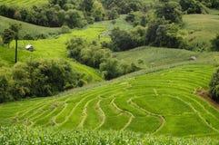 Взгляд конца-вверх террасы риса Стоковые Изображения RF