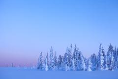 Взгляд красивого леса зимы в свете на заходе солнца Стоковые Изображения