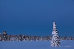 Взгляд красивого леса зимы в свете на заходе солнца Стоковое Фото