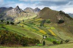 Взгляд красочных полей террасы Стоковое Изображение RF