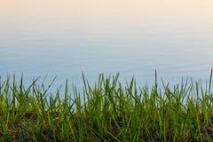 Взгляд крупного плана травы и ` s воды окаймляются Стоковое фото RF