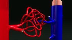 Взгляд крупного плана TS артерии и вены иллюстрация штока