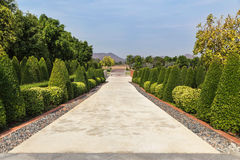 Взгляд кустарника уравновешивая парк ornamental публично зеленые и поле травы Стоковое Изображение