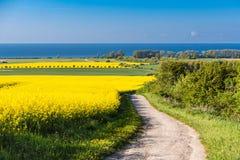 Взгляд к Балтийскому морю с канола полем Стоковые Фото