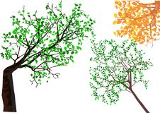 Взгляд к деревьям от дна Стоковые Изображения