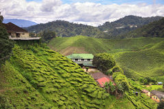 Взгляд к плантации чая с немногими домами среди холмов Стоковое Изображение