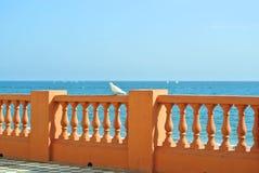 Взгляд к Средиземному морю от прогулки портового района пляжа Benalmadena и белого голубя на forefround Стоковые Изображения