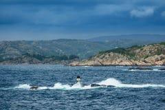 Взгляд к Lyngdalfjord в Норвегии стоковые изображения rf