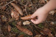 Взгляд макроса конца-вверх руки держа конус спруса и ветвь спруса на темной предпосылке леса стоковое изображение rf